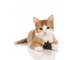 Zabawka dla kota kocimiętka w ciasteczku 4,5 x 2 cm - Hunter