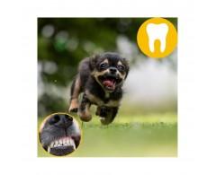 TORGAS® - naturalny BIO gryzak XXS dla psów o wadze do 4 kg