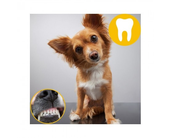 TORGAS® - naturalny BIO gryzak XS dla psów o wadze 4,5 - 8 kg