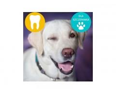 Vet's Best Dental zestaw dla szczeniąt – pasta do zębów i sylikonowa szczoteczka