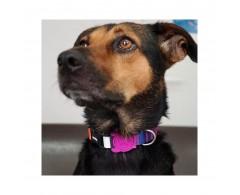 Obroża dla psa rozmiar M 37-53 cm tęczowa - Zee Dog Prisma